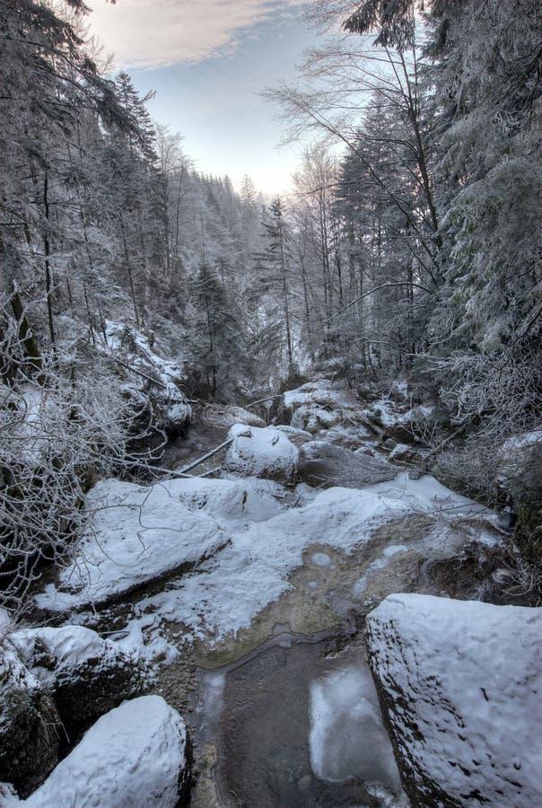 streambed冬天 库存照片