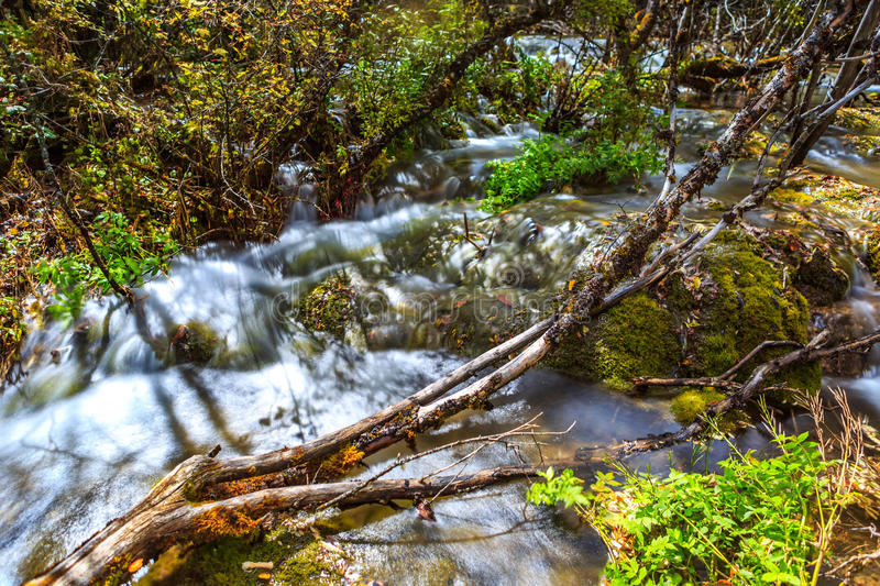 Streams, lakes,. Lakes, streams, a dead trees lies in the middle of the river, the river flowed from under the deadwood royalty free stock images