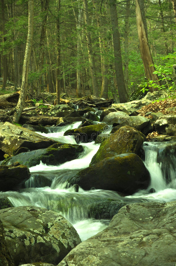 Streams And Rocks. A stream trickling down some rocks in a woodland forest stock photo
