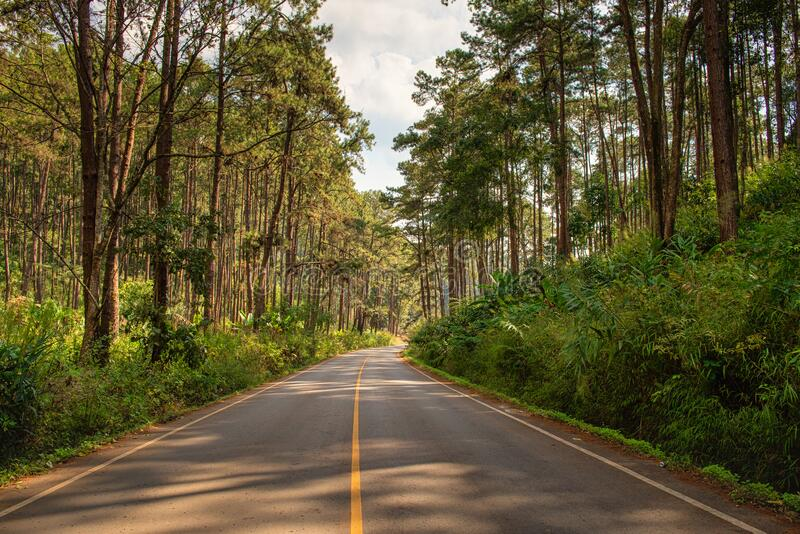 Street Asphalt Highway Along Woodland in The Pine Forest,  Country Road With Beautiful Perspective Scenery View in Summer Season. Landscape Natural Scenic and royalty free stock photo