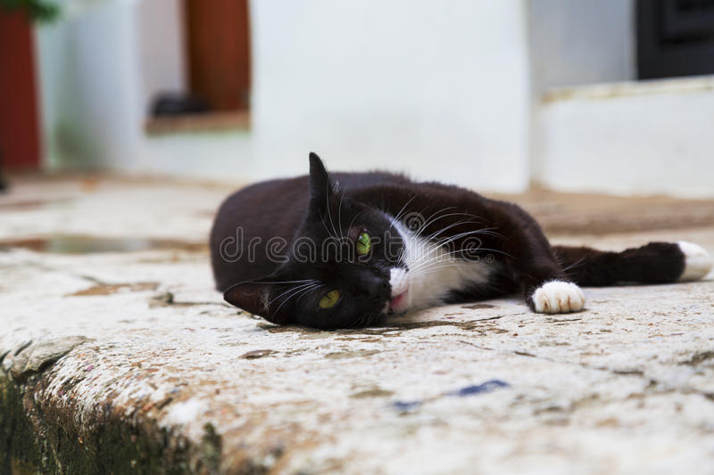 Street cat. Adorable black and white cat relaxing and posing on sidewalk royalty free stock images