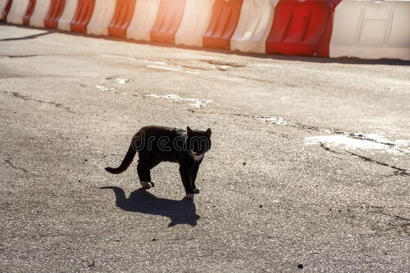 Cat stands on the road against the background of white and red plastic road fences street cat royalty free stock photos
