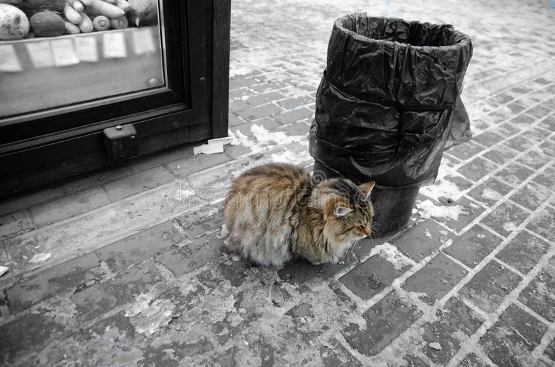 Street cat freezing near the bin royalty free stock image