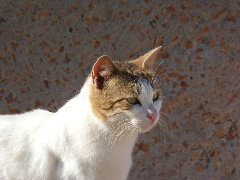 Street Cat with green eyes and a sharpen mustache stock photo