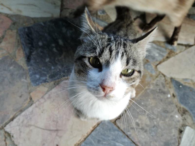 Street cat looking up stock photos