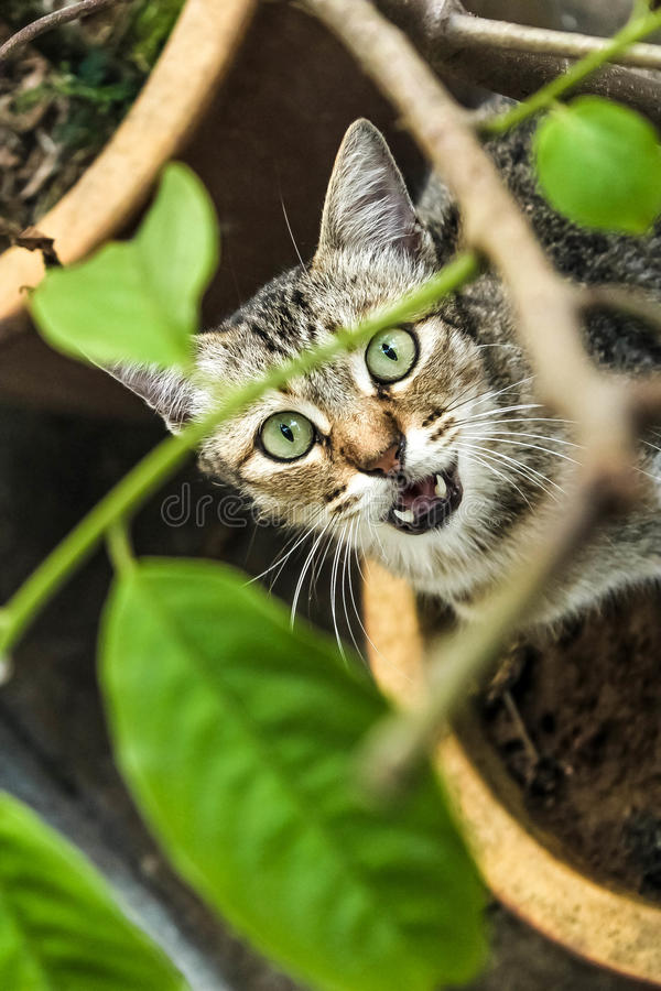 The street cat. Request to eat fish stock photos