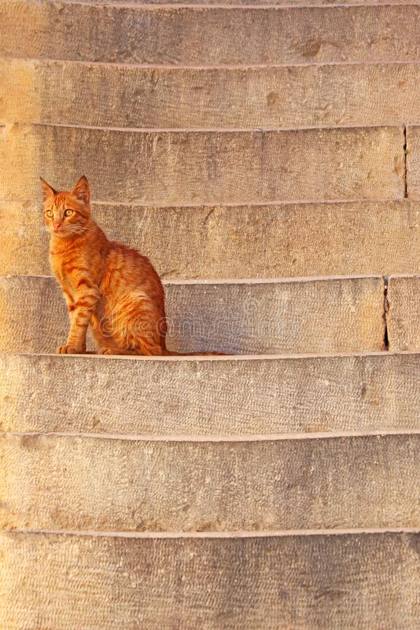 A street cat sits on the stairs royalty free stock photos