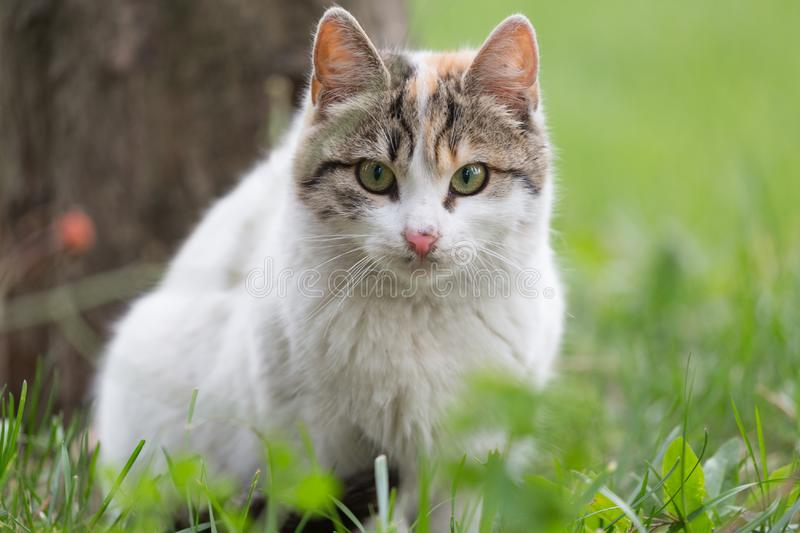Street cat sitting on the green Crave. Close-up portrait royalty free stock images