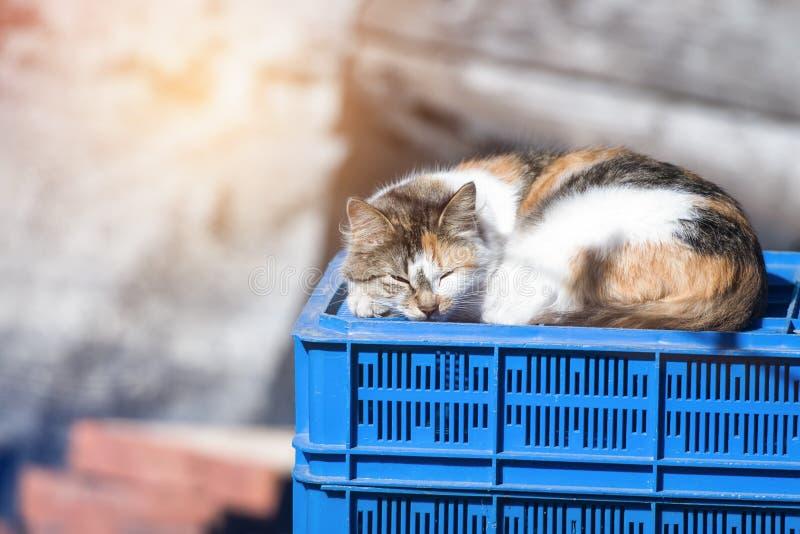 Street cat sleeping on a plastic box royalty free stock photo