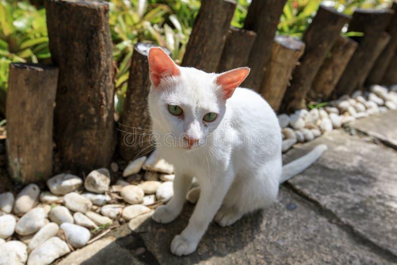 Street cat. White homeless cat on the street stock photos