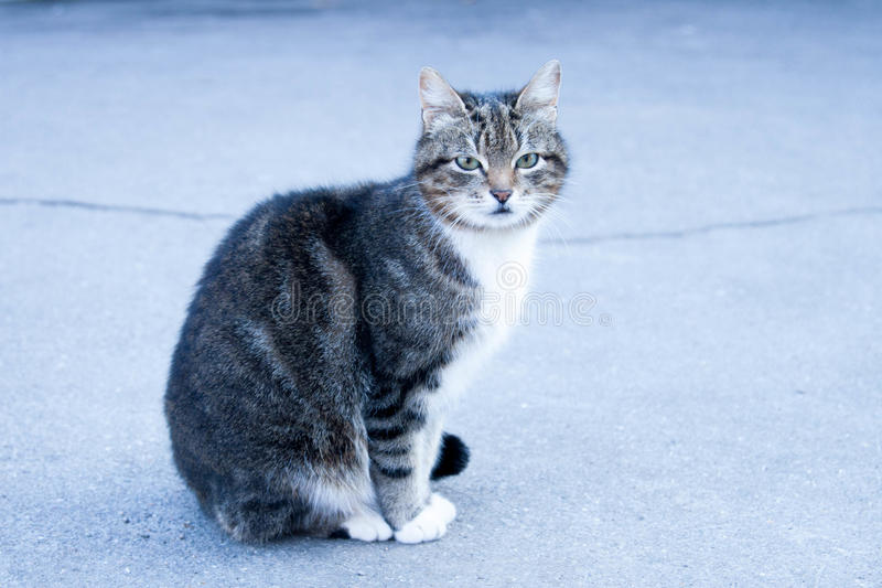 Street cat will soon give birth to kittens royalty free stock photos
