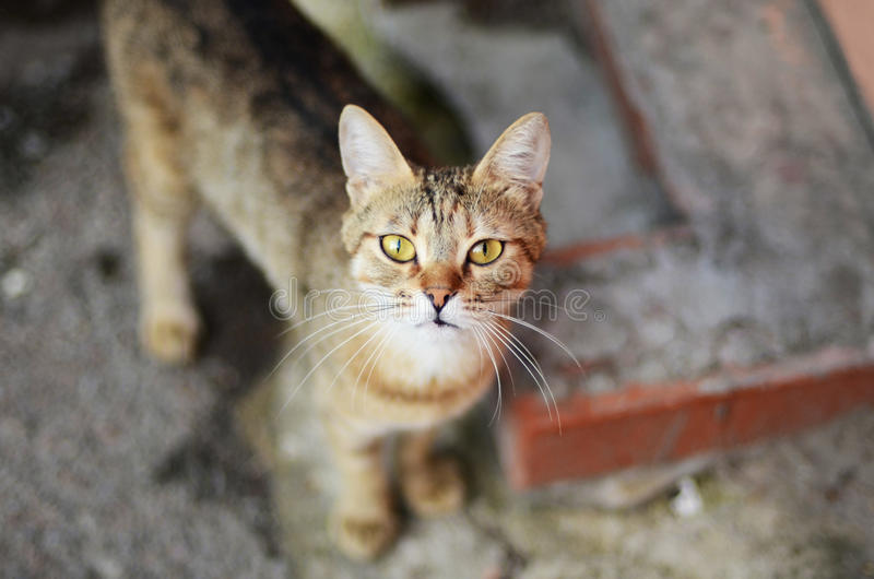 Street cat. stock photo