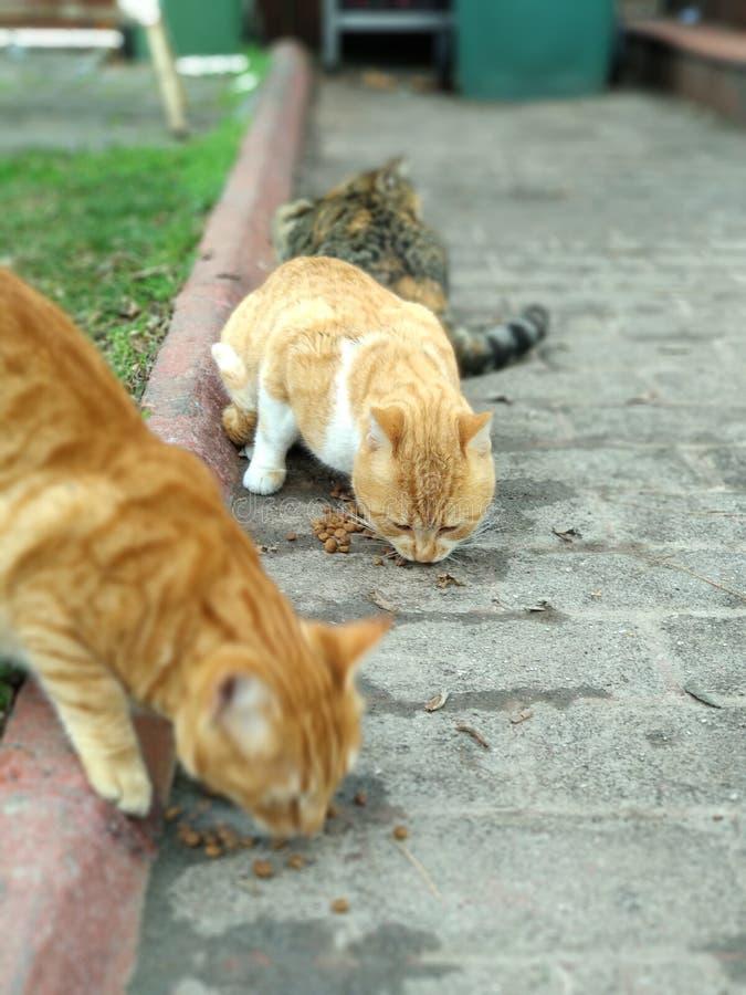 Street cats stock photography