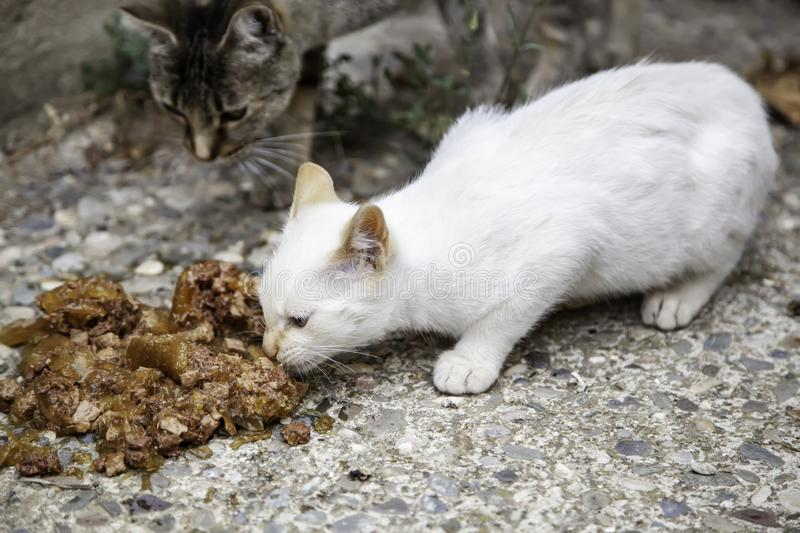 Street cats eating. Detail of abandoned animals, food, stray, homeless, kitten, hungry, pet, feral, cute, outdoor, mammal, young, wild, dirty, fur, alley royalty free stock photography