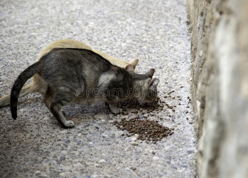 Street cats eating. Detail of abandoned animals, food, stray, homeless, kitten, hungry, pet, feral, cute, outdoor, mammal, young, wild, dirty, fur, alley stock photography
