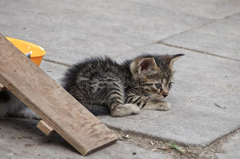 Street cats. Little stray cat in refuge for cats stock photos