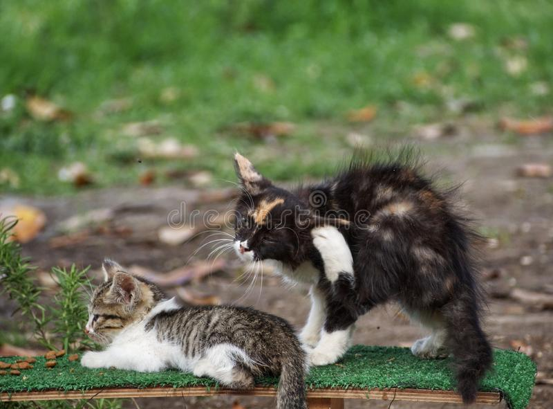 Street cats. Two stray cats in a park for cats stock images