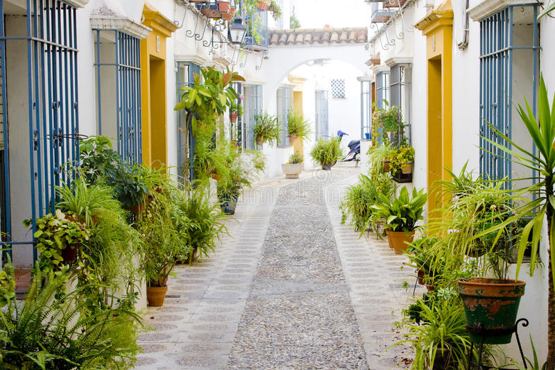 Download Street of Cordoba stock photo. Image of buildings, flower - 14524592