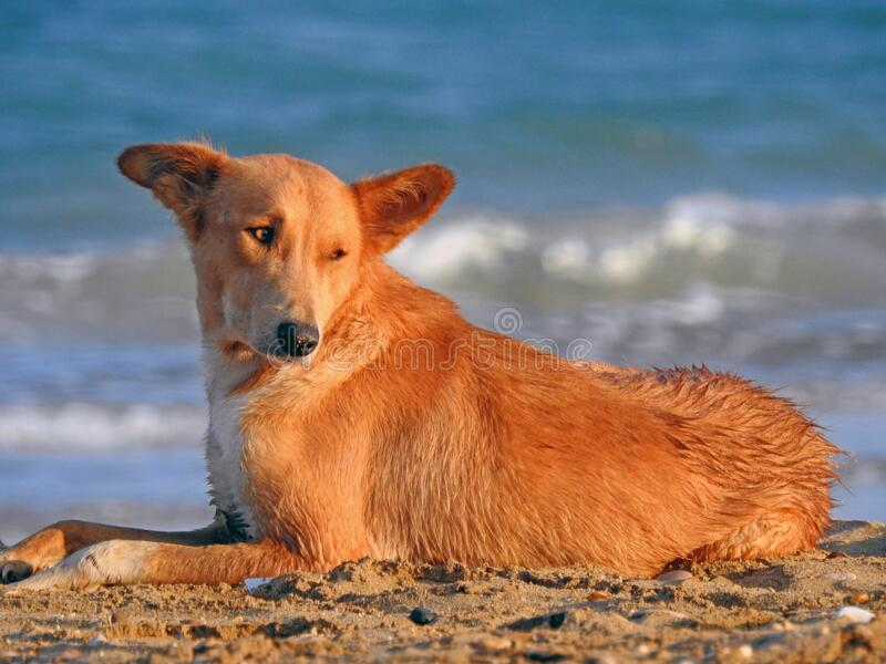 521 Dog Egypt Photos Free Royalty Free Stock Photos From Dreamstime
