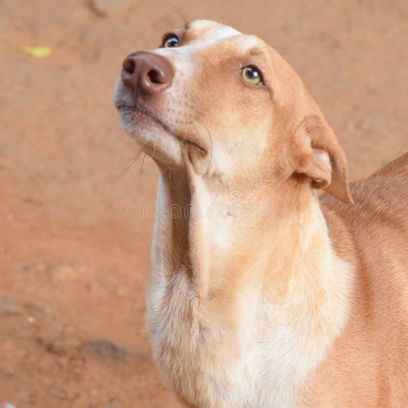 Street dog stock images