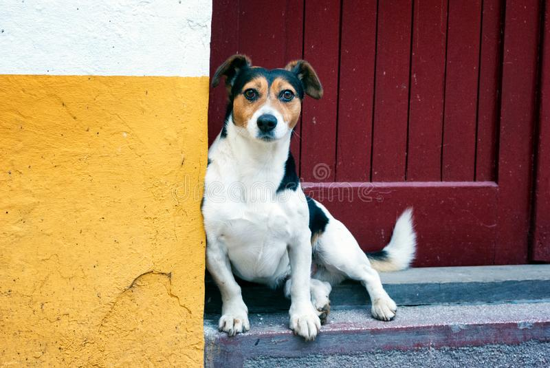 Street Dog Chilling on the Stairs stock image