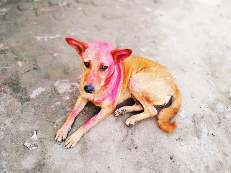 Street Dog Sitting For Food. Street dog sitting food animal stock photo