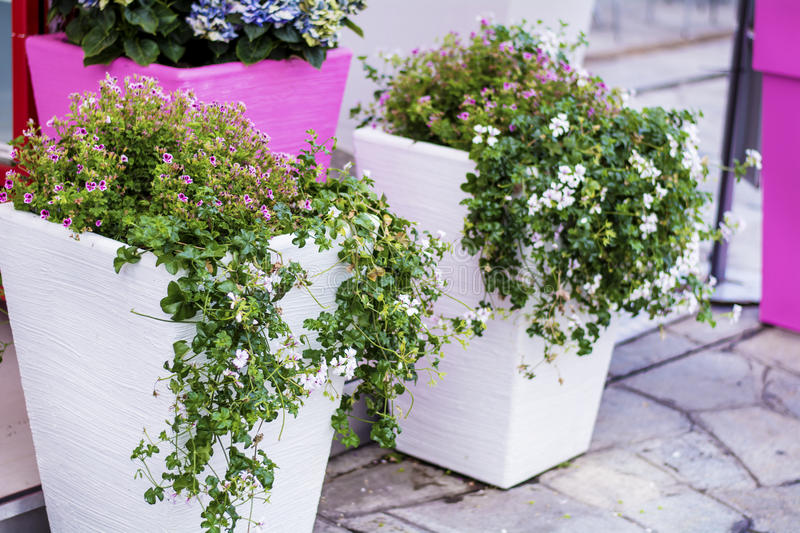 Street flower decoration in Sanremo,Italy. White clay pots with flowers on sidewalk in Sanremo,Italy stock photo