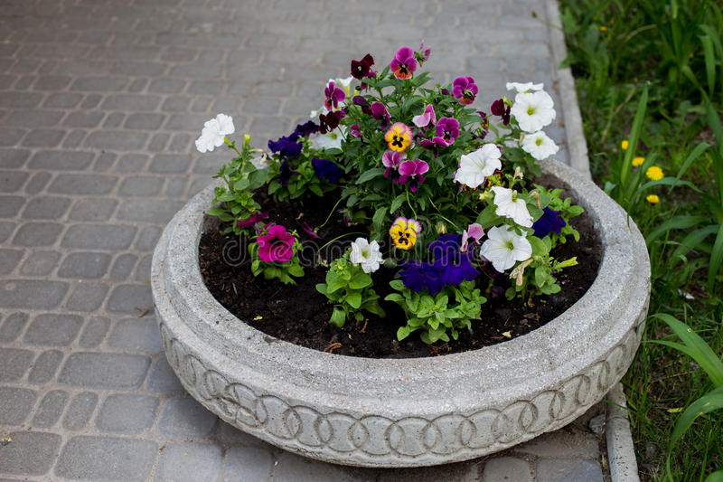 Street flower pot. With Petunia flowers on grey tile background royalty free stock images