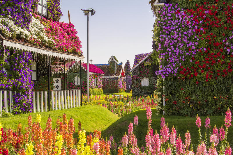 Street of flowers in the Miracle Garden park, Dubai stock image
