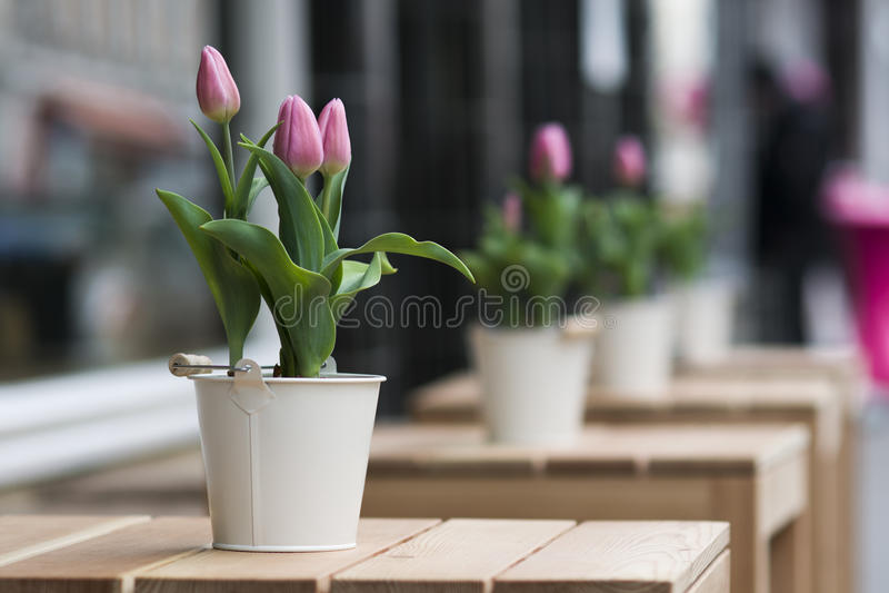 Street flowers royalty free stock photos
