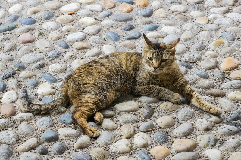 Street homeless cat without a master royalty free stock photo
