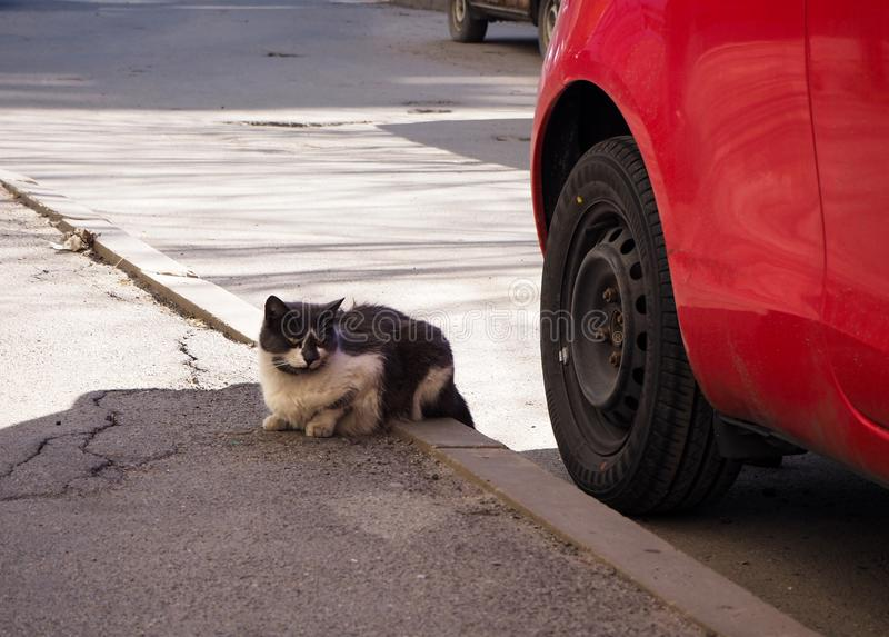 Street homeless cat on the street royalty free stock image