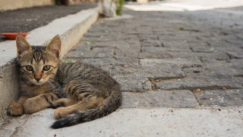 Street kitty stock image