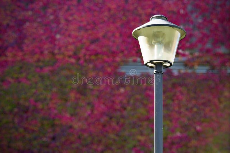 Download Street lamp stock photo. Image of townhouse, savings - 26590000