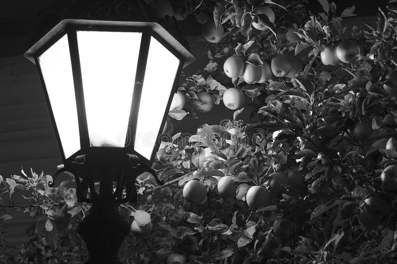 A street lamp against the backdrop of an apple tree. stock photos