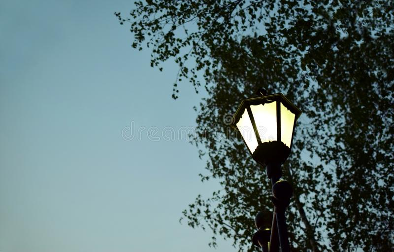 Street lamp on a background of leaves of a tree. The lamp shines bright white light. Time of the day: dusk. Turn on the lights stock photo