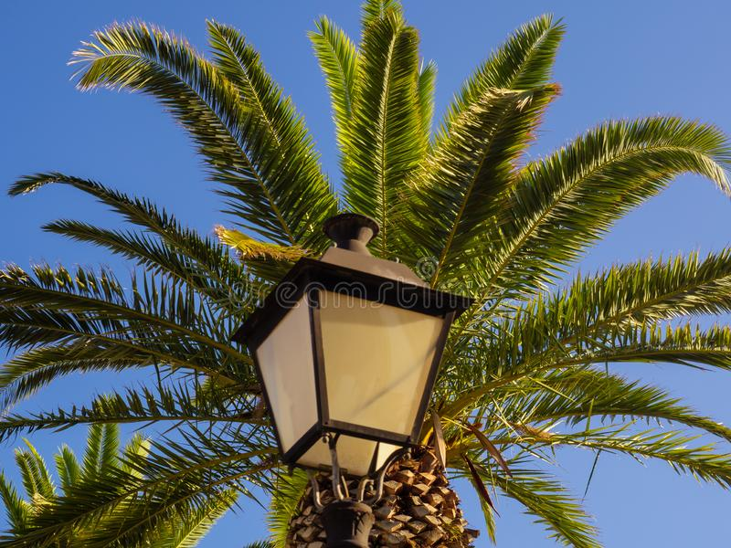 Street lamp and big palm tree - clear sky background royalty free stock photos