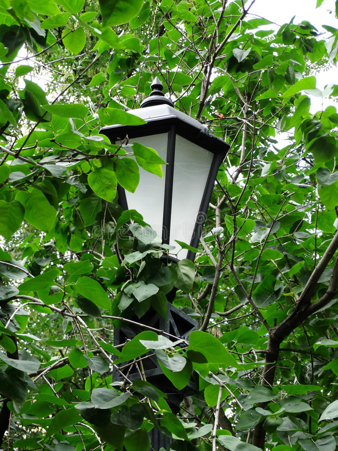 Street lamp in foliage. royalty free stock images