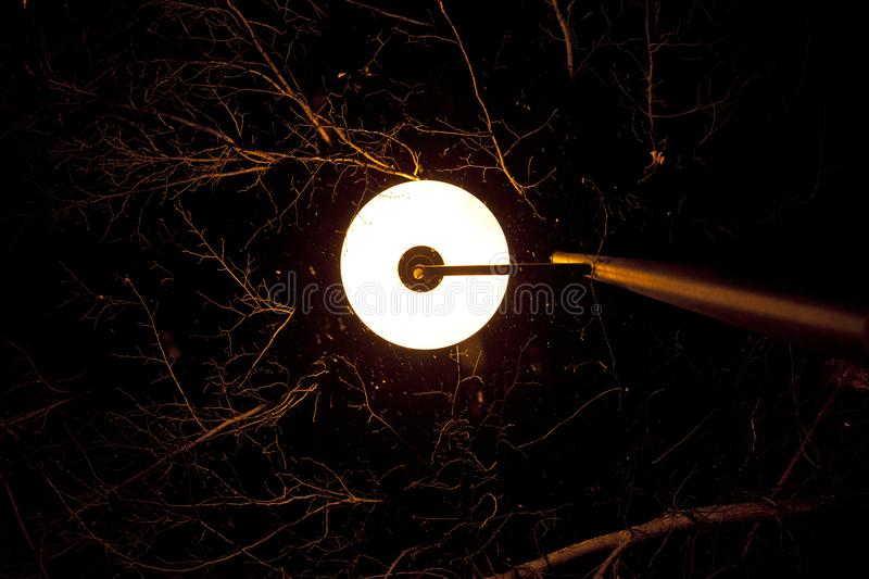 Street lamp lit branches of trees at night stock images