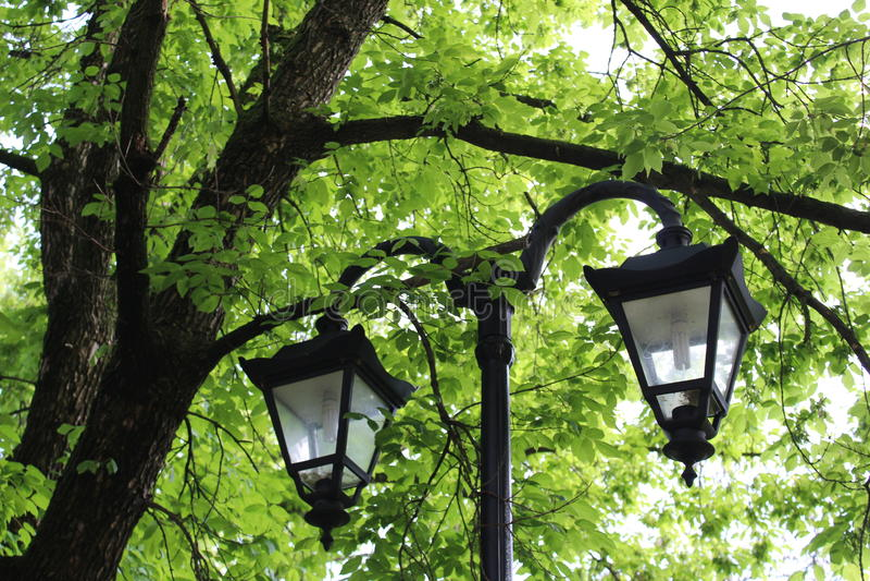 Street lamps stock image
