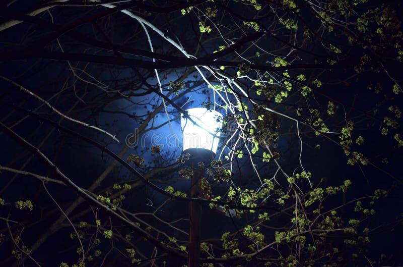 Street Lantern illumine un arbre la nuit sur fond de lune et de ciel bleu foncé photo libre de droits
