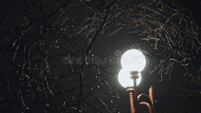 Street light glowing among wet bare tree branches in the night during rainy weather, viewed from low angle stock images