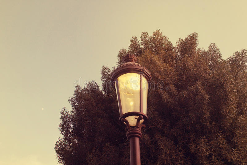 Street Light. Street lamp in working mode in the winter season. A green tree behind the street light. And a wonderful peace view of sky background royalty free stock photos