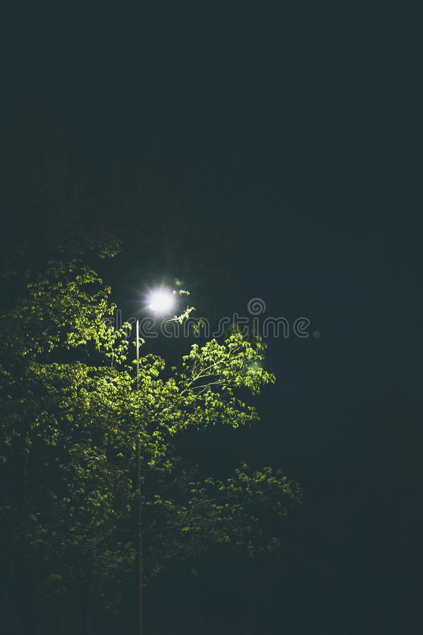 Street light and tree. Street light illuminating atree at night stock image