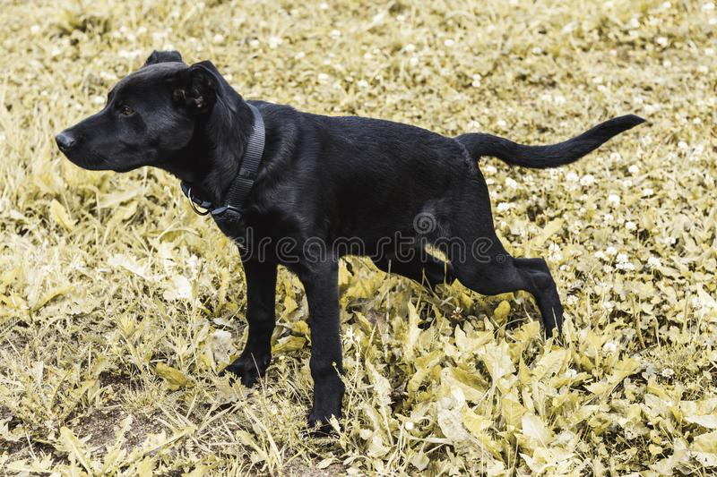Street lighting. black dog. fulfills the need. there is toning.  stock photos