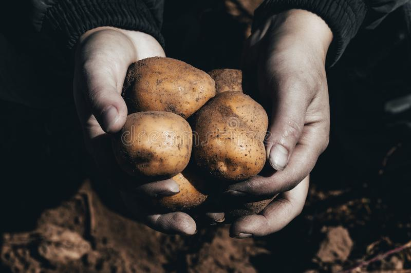 The ground under your feet. A man holds potatoes in his hands. Street lighting. the ground under your feet. A man holds potatoes in his hands. tinted, age, help royalty free stock image