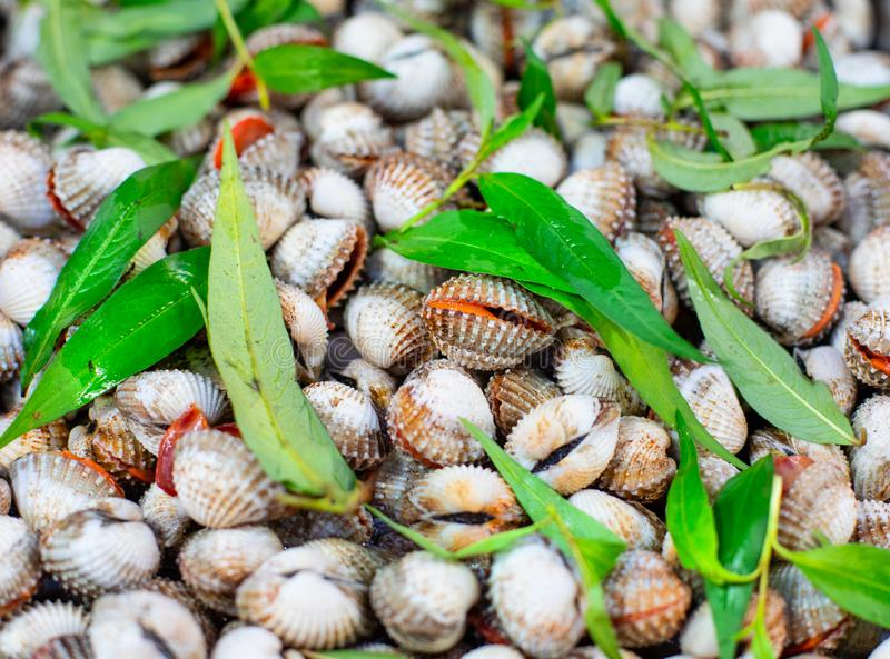 Street market with Vietnamese food and cousine. Pile of mussels, top view royalty free stock photo