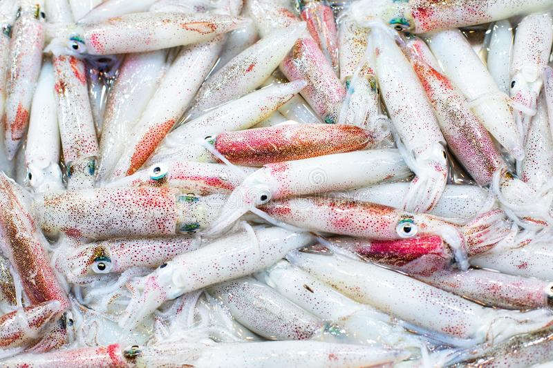 Street market with Vietnamese food and cousine. Seafood- pile of squids royalty free stock photography