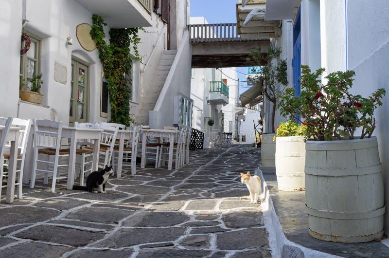 Street in Paros island, Cyclades, Greece stock photography