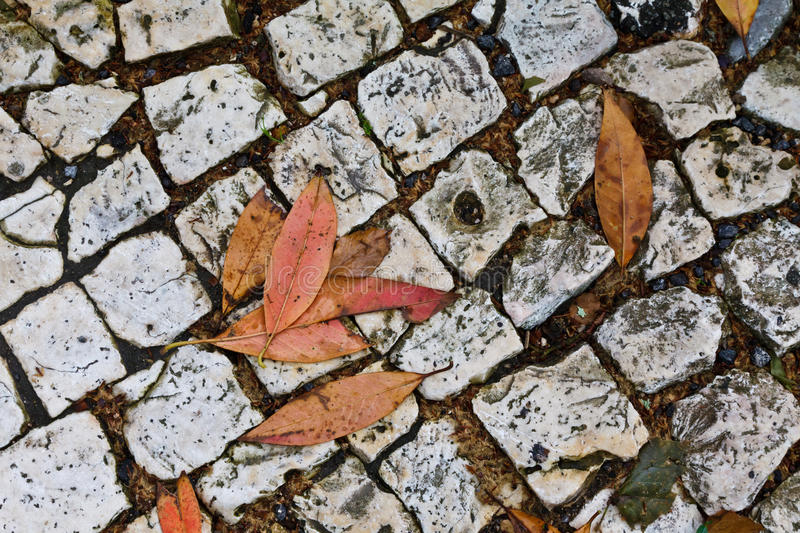 Street Paved with Cobblestone royalty free stock photo